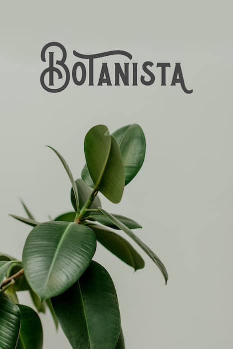 Botanista Poster for Alebrixe Website