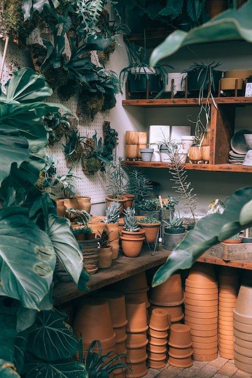 botanista-portfolio-2