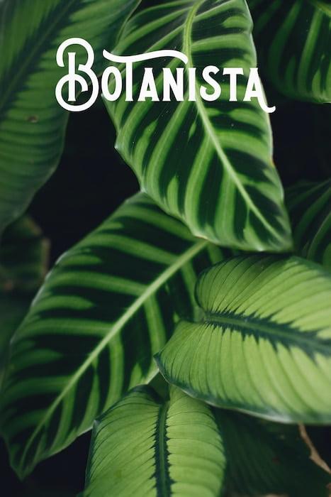 Botanista background zotello creative